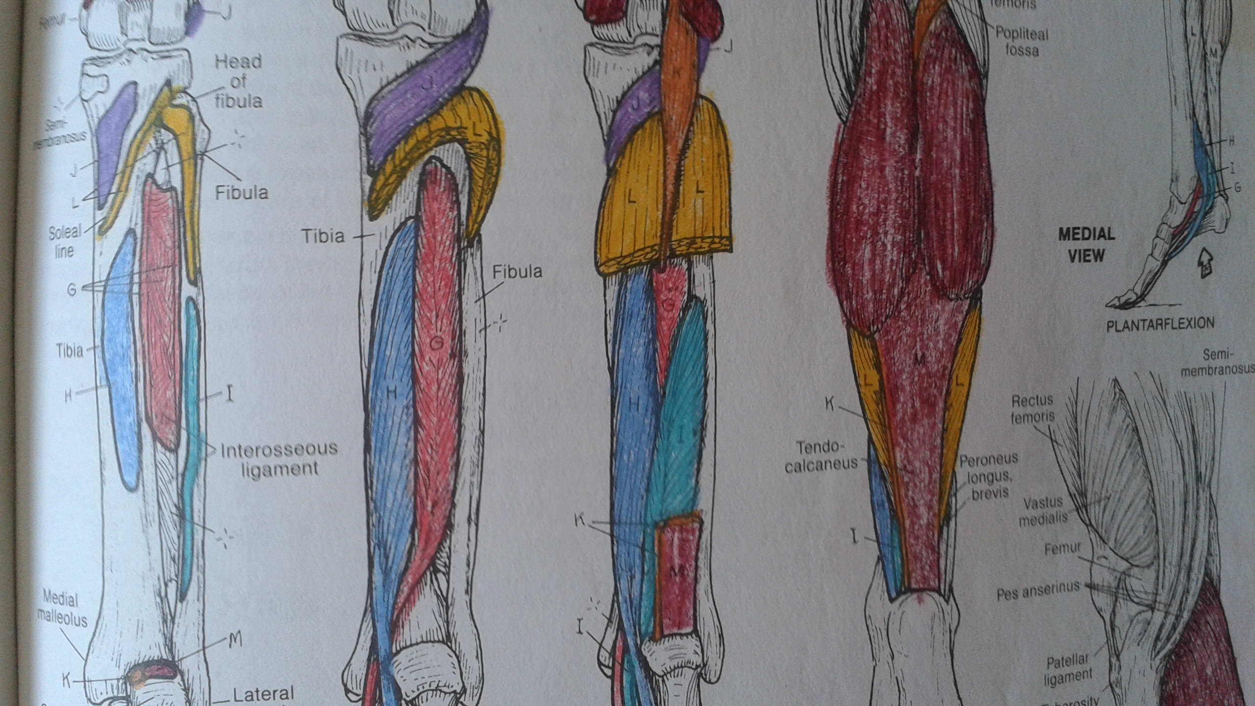 Musculoskeletal Anatomy Coloring Book 2e | Coloring Pages